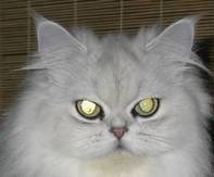 Pet Eye Fix Guide 2.2.6 ویرایش رنگ چشم در عکس