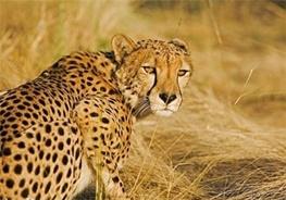 نابودی کامل در کمین حیوانات در حال انقراض/ حیواناتی که در ایران منقرض میشوند